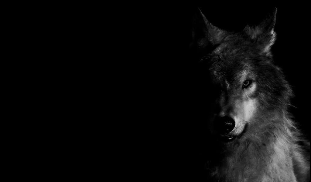 We Train To Be Wolves, Not Sheep